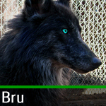 Bru the Dog