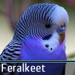 Feralkeet